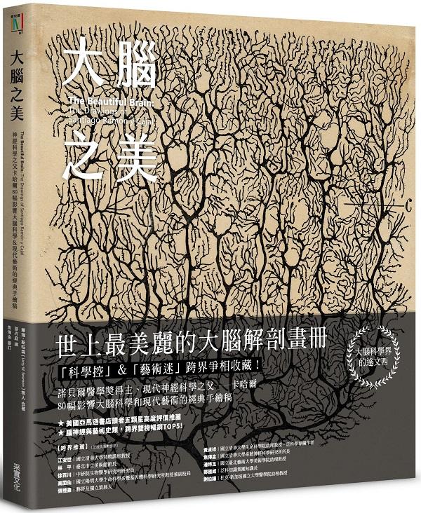 大腦之美:神經科學之父卡哈爾,80幅影響大腦科學&現代藝術的經典手繪稿