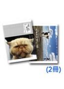 拍貓,是很嚴肅的(套書)(2冊)