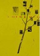 2004 Reading
