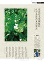 花草遊戲No.69:日日鮮採!用盆栽就有好結果的家庭果樹