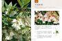 愛花人集合!300種最新花卉栽培與應用