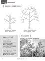 花木修剪の趣味科學:掌握讓人和樹能愉快共生的修剪訣竅