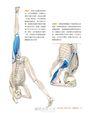 上肢平衡與倒立瑜伽:激發腦內啡、活化心肺、調節神經系統的精準瑜伽解剖書