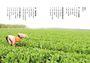 農村,你好嗎?:寫在農村的24則鄉野求生筆記
