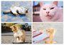 「喵言喵語」Words of Cats:「圖解」喵星人深奧的生活哲理