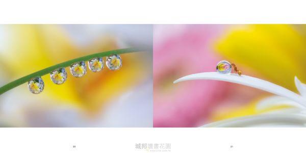 小確幸|浅井美紀的水滴微距攝影世界