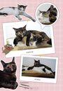 安潔麗娜來我家:阿油養貓日記