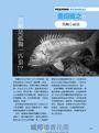 黑鯛完全制霸:生態習性全解析&達人戰術大公開