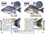 海水魚完全識別圖解:267種海水魚全解析