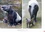 怎麼會這麼萌?:動物寶寶寫真書