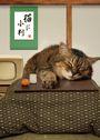 貓手相:貓咪的性格,看看肉球就知道!