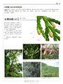 台灣原生植物全圖鑑第一卷:蘇鐵科──蘭科(雙袋蘭屬)(APG IV增訂版)