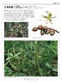 台灣原生植物全圖鑑第二卷:蘭科(恩普莎蘭屬)——燈心草科